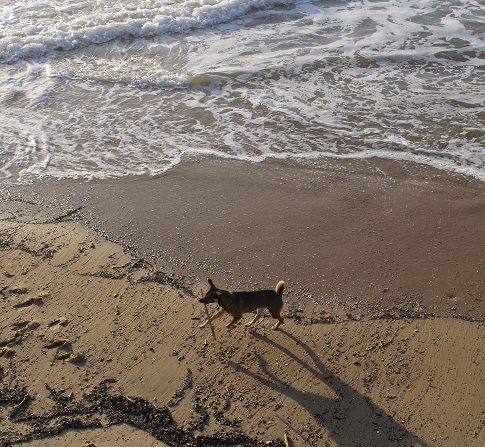 Hund på stranden i San Sebastián